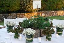 pianta d ulivo matrimonio