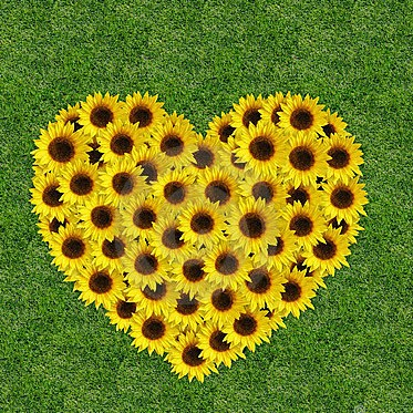 Significato dei fiori: i girasoli