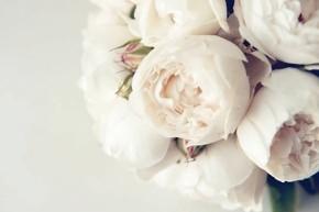 Peonie per l'allestimento floreale del matrimonio