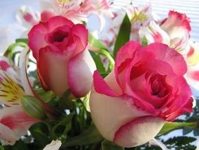 Significato dei fiori: la rosa