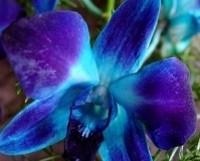 Bouquet di orchidee per la sposa moderna