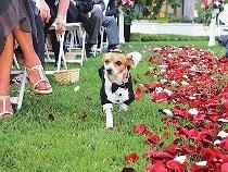 Il cane gira tra gli invitati al matrimonio