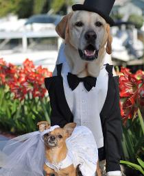 I cani vestiti per il matrimonio