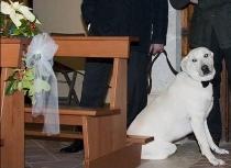 Il cane tra i banchi della Chiesa durante le nozze