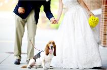 Il cane invitato al matrimonio