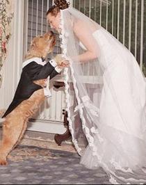 Un invitato d'eccezione: il cane al tuo matrimonio