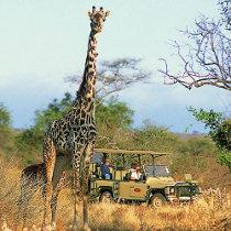 Safari fotografico durante il viaggio di nozze