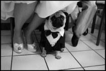 Fotografia di un invitato speciale al matrimonio di Video Studio Roberto Marchionne