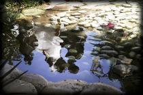 Foto artistica degli sposi riflessi nell'acqua realizzata da Silvia Cleri