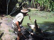 Incontro con un alligatore nel Parco del Wooroonooran