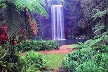 Visita al Parco Nazionale di Wooroonooran durante la luna di miele