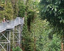 Escursione al Mamu Rainforest Canopy Walkway durante il viaggio di nozze