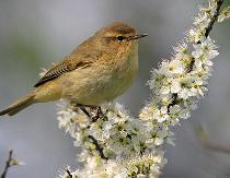 Piccolo uccellino salvato dalla LIPU - Lega Italiana Protezione Uccelli