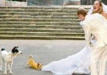 Un cagnolino morde il vestito della sposa