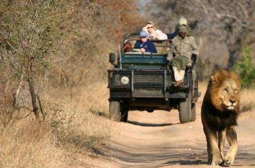 Safari in Sud Africa durante la luna di miele