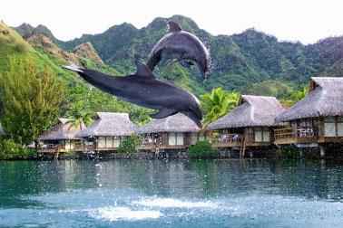 Moorea - A contatto con i Delfini