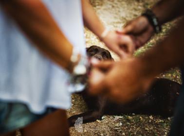 reportage matrimonio cane 3c