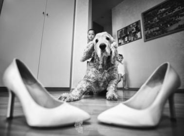 reportage matrimonio cane 5