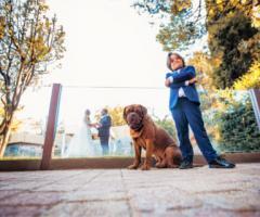 Il matrimonio con il cane