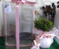Mirto in organza con scatola per battesimo