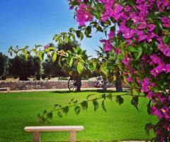 Masseria Eccellenza - Una vista del giardino