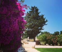 Masseria Eccellenza - Dettagli del giardino