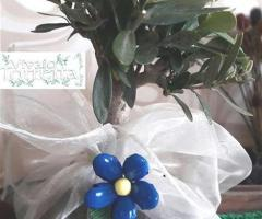 Bomboniere bonsai- Vivaio Torretta