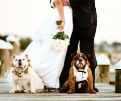 """5 regole da seguire se volete """"invitare"""" il cane al matrimonio"""