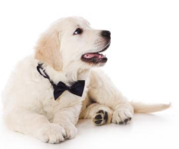 Fabrizio Maggio Dog Trainer