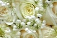 Bouquet di rose della sposa romantica