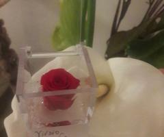 Mini rose vive di ogni colore per ogni cerimonia