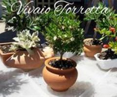 Piante Vivaio Torretta in ceramica
