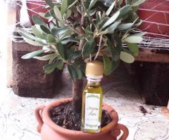Ulivo con bottiglietta olio   Vivaio Torretta