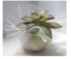 Bomboniera pianta grassa  Vivaio Torretta
