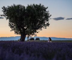 Dario Imparato Foto - Foto per il matrimonio a Pavia