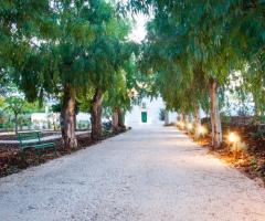 Masseria San Michele - Il viale di ingresso della masseria