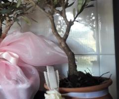 Bomboniera ulivi