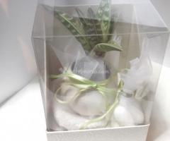 Aloe mini   in scatola doppia con confetti