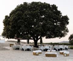 Masseria Torre di Nebbia - Il ricevimento di nozze sotto l'albero