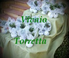 Bomboniere bonsai - Vivaio Torretta