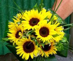 Piante e fiori Anna e Mauro