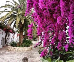 Masseria Montalbano - Il giardino fiorito