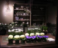 Dianthus Flower Store