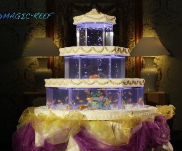Crystal Torta Acquario