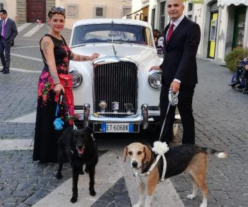 Le Cat & Dog Sitter Roma