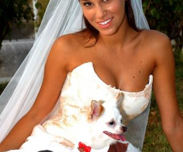 Qua la zampa - Wedding Dog Sitter
