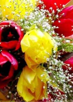 Bouquet di tulipani e gipsofila