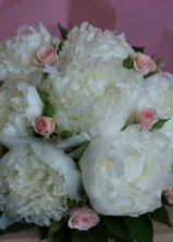 Bouquet di peonie bianche roselline per la sposa