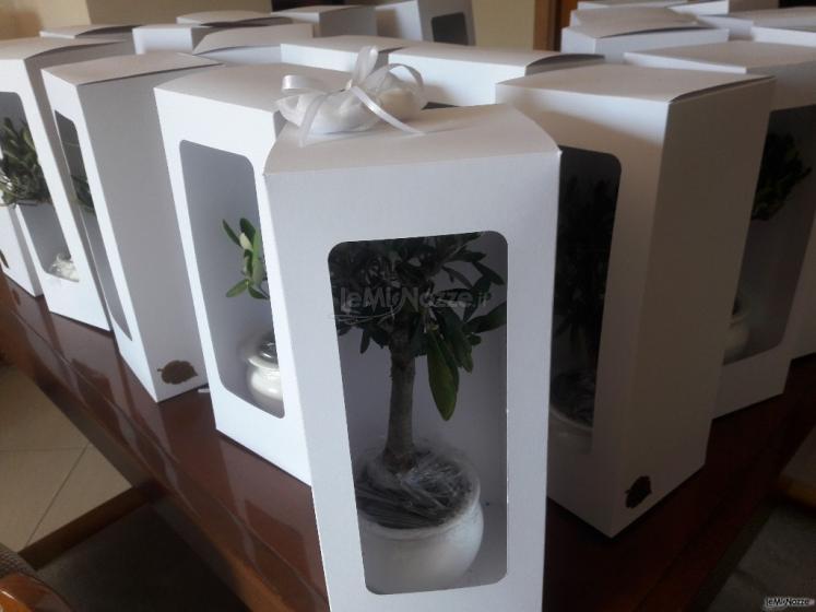 Bomboniere in porcellana con scatola ad Acicatena