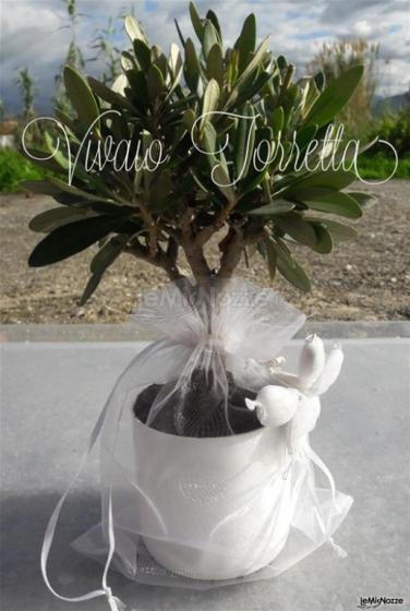 Ulivo in pvc con sacchetto di organza e confetti bianchi